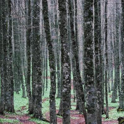 Waldakademie Peter Wohlleben: Entdecker- und Wanderreisen
