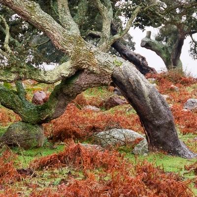 Das Geheimnis der Bäume und wie sie komunizieren: Korkeichenwald in Sardinien